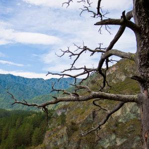 Чемальская ГЭС - Вид с «Козьей тропы»